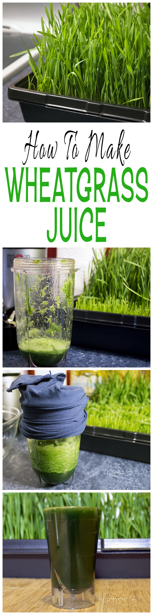 How To Make Wheatgrass Juice Using Fresh Wheatgrass And A Blender