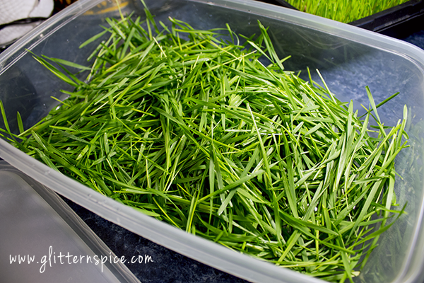 How To Store Wheatgrass